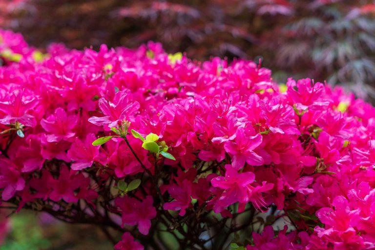 Bloemen Clingendael