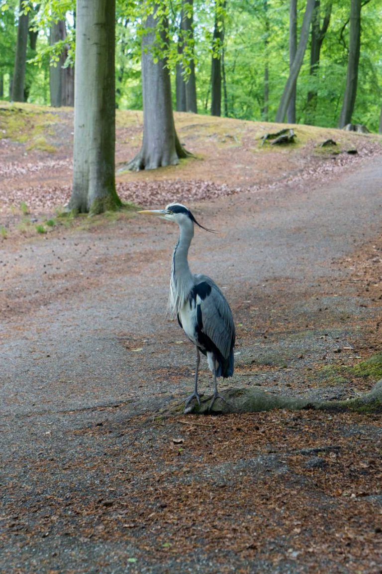 Clingendael reiger in bos