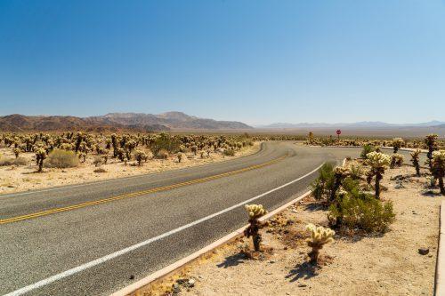 De bochtige weg in Joshua national Park