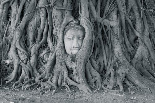 Famous buddha head Ayutthaya