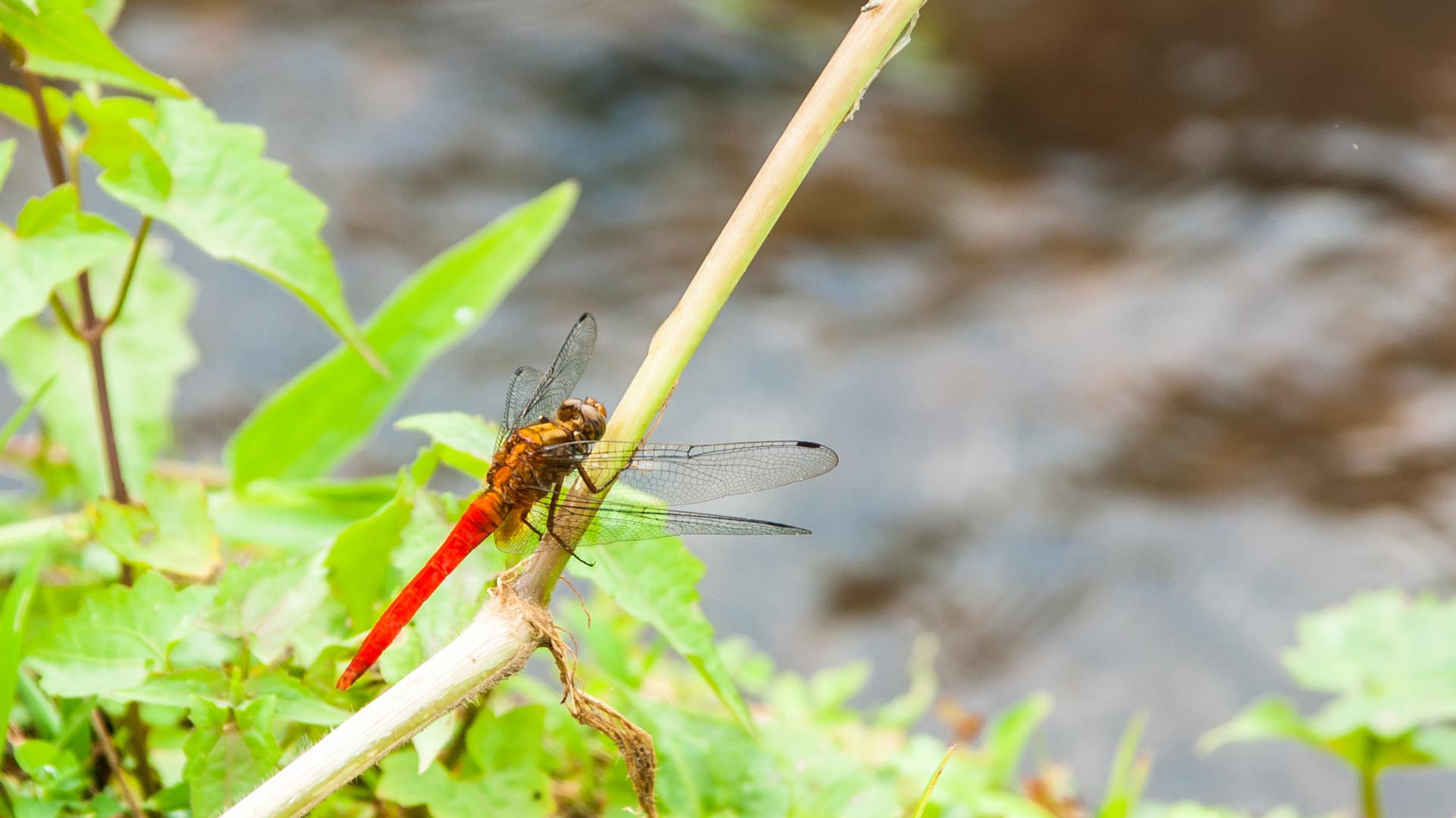 Dragonfly approach