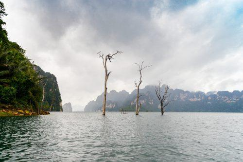 Drie bomen steken boven het water in Khao Sok