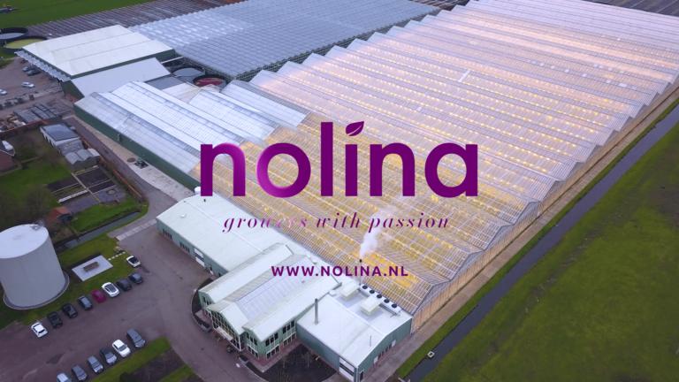 Social video's Nolina Plants